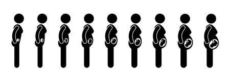 prenatal stages